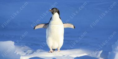 Пингвины в небе